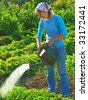 woman watering vegetable bed at the rural farm - stock photo