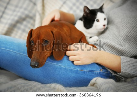 Woman with cute dachshund puppy and cat on plaid background - stock photo