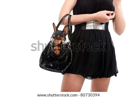 woman with dog in bag, trendy lifestyle, isolated on white background - stock photo
