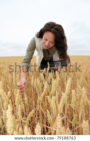 Woman with electronic tablet analyzing wheat ears - stock photo