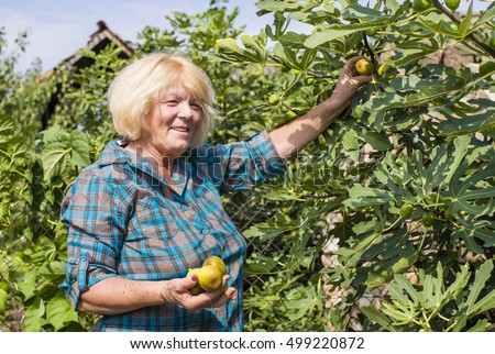 Woman with freshly harvested figs in the garden. Organic food concept