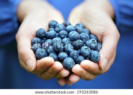 Woman with handful of freshly picked organic blueberries - stock photo