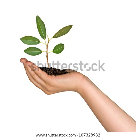 Woman with sapling in hand - stock photo