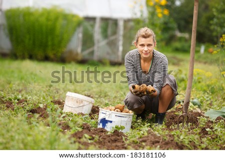 Woman working in garden, with a fork harvesting potatoes - stock photo