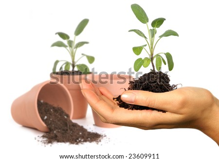 Womans Hand Holding New Springtime Seedling With Potting Pots in the Background. Background is Intentionally Out of Focus.