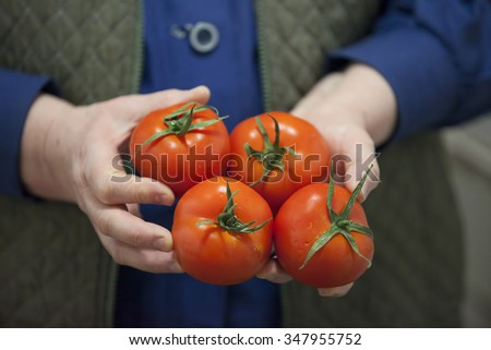 women farmer holding fresh tomato - stock photo