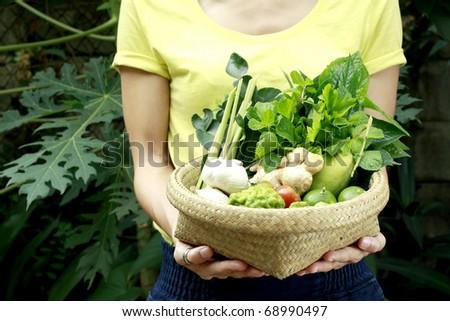women hands holding a basket full of vegetables - stock photo