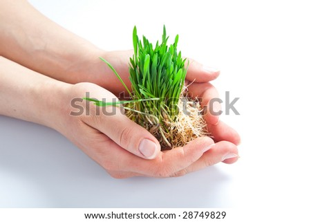 Women hands protect sprouts green grass - stock photo