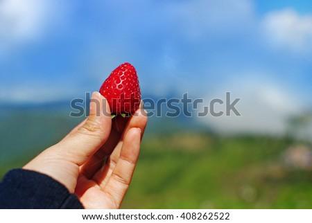 Women Holding Strawberry - stock photo