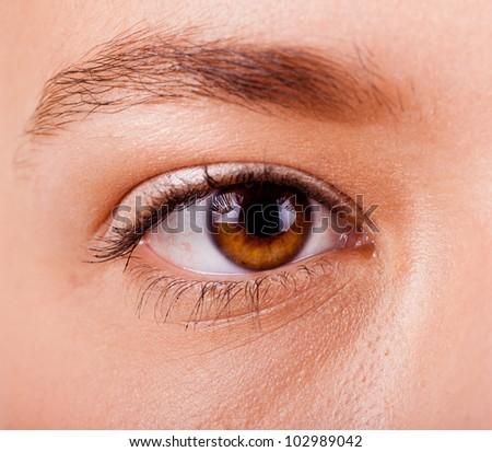 Women' s eyes with the eyebrow closeup - stock photo