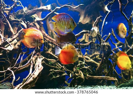 Wonderful and beautiful underwater world with corals and tropical fish. Aquarium, underwater, fish, aquarium, underwater, fish, aquarium, underwater, fish, aquarium, underwater, fish, aquarium - stock photo