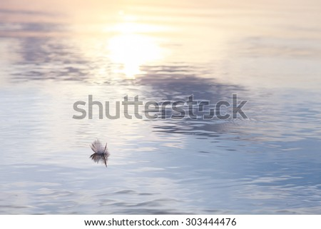 Wonderful sunset on the lake. Beautiful nature. A great place to relax. On the lake swims white feather.