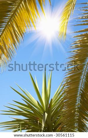 Wonderful sunset,palms and blue sky. - stock photo