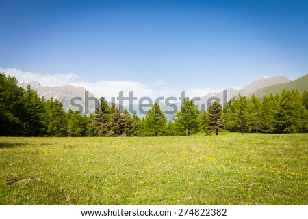 Wonderful view on Italian Alps with a forest background during a summer day. Piedmont region - North Italy. - stock photo