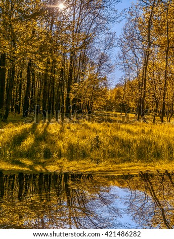 wonderful view. reflection of tree and grass in a lake in the park . creative image - stock photo