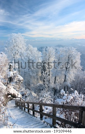 Wonderful winter day with trees covered with white frost (Zurich, Switzerland) - stock photo