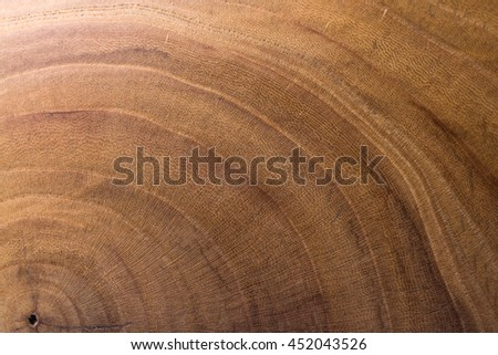 wood background. wood texture. elm. background in macro lens shooting.  - stock photo
