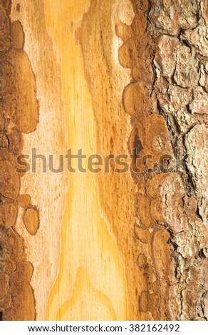 Wood bark closeup. Background - stock photo