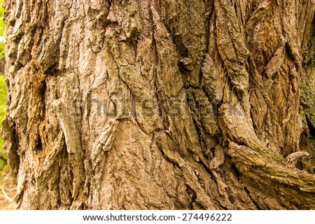 wood, bark, wood structure, cut down a tree - stock photo