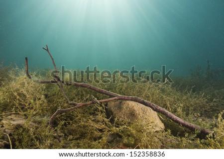 Wood branch underwater - stock photo
