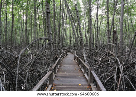 wood bridge go to mangrove forest - stock photo