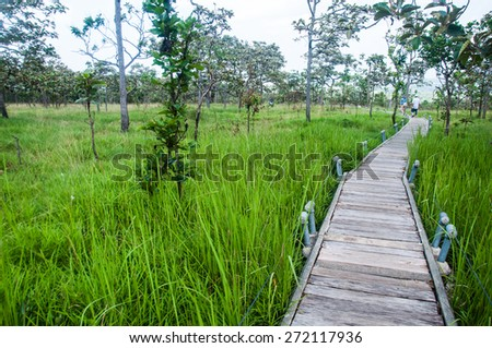 wood bridge walk in the park Pa Hin Ngam National Park in Chaiyaphom - stock photo