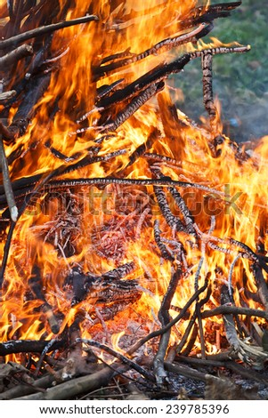 wood burning flame in the wild - stock photo