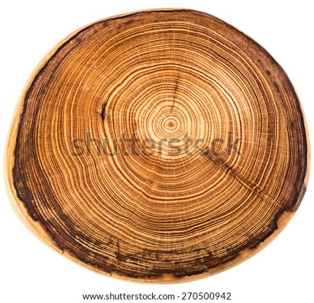Wood circle texture slice background - stock photo