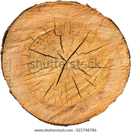 Wood cross section with bark