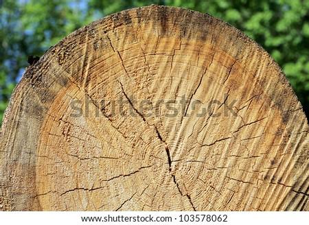 Wood cut - stock photo