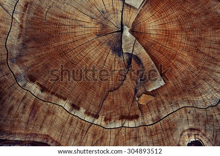 wood cut texture ring background - stock photo