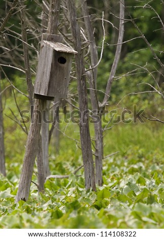 Wood Duck nest box / bird house, built over wetland swamp habitat in a Pennsylvania Game Land; waterfowl breeding and conservation; wildlife management; duck hunting - stock photo