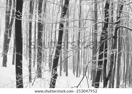 Wood forest winter season. - stock photo