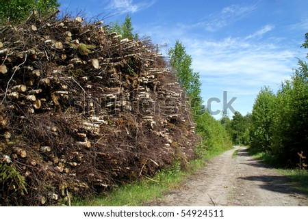 Wood Fuel for Biomass - stock photo