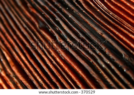 Wood Grain - Macro - stock photo