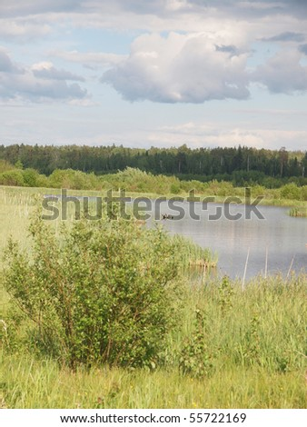Wood in summer. Russia