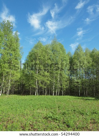 Wood in the spring. Karelia, Russia