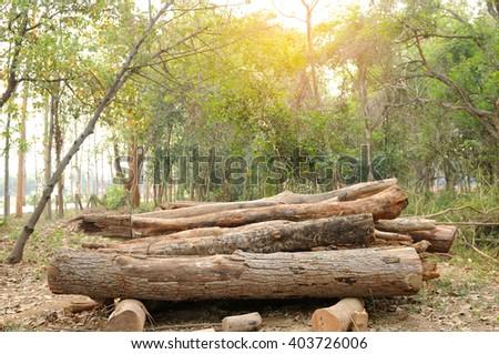 wood logs - stock photo
