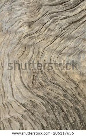 wood nature texture - stock photo