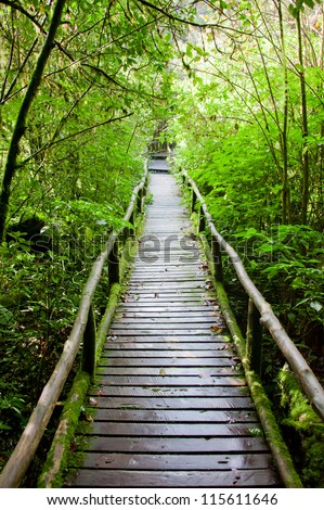 Wood path after raining through tropical forest - stock photo