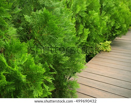 Wood path in the garden with tree