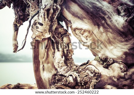 Wood patterns in a large root ball washed up on a beach. - stock photo
