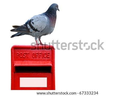 Wood pigeon standing on a bright red post box - stock photo