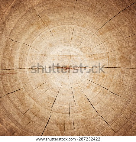 wood rings texture background. cracked wooden cut - stock photo