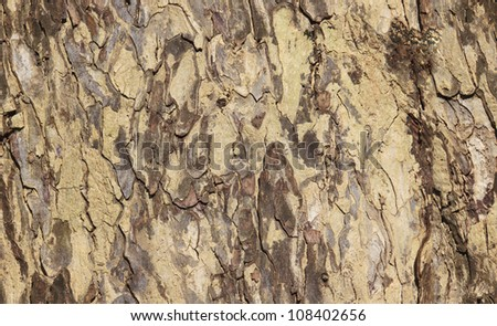 wood seamless pattern - stock photo