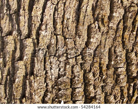 Wood seamless pattern. - stock photo