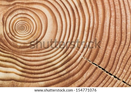 Wood section. - stock photo