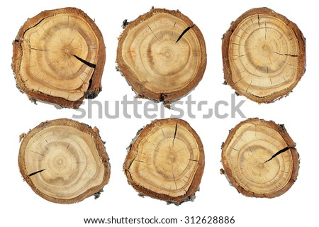 Wood slice texture, Set of slices of wood. Set slice of tree trunk - stock photo