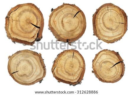 Wood slice texture, Set of slices of wood. Set slice of tree trunk - stock photo