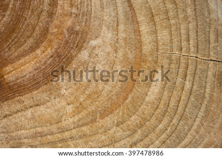 Wood stump texture, cutted tree trunk, Wood close-up, old Wood tree stump macro top view, crack wood ancient growth rings, wooden  timber natural background - stock photo